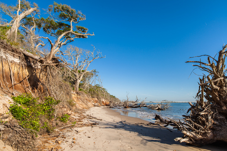 coastal erosion: Natural erosion along the shoreline on Big Talbot Island in Jacksonville.