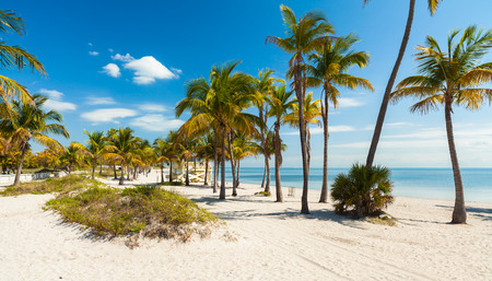 key biscayne: Beautiful Crandon Park Beach located in Key Biscayne in Miami.
