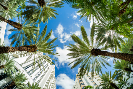 florida beach: Beautiful Miami Beach fish eye cityscape with art deco architecture and palm trees.