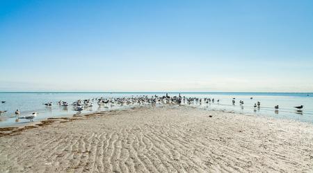 key biscayne: Sandbar with sea birds on beautiful Crandon Park Beach in Key Biscayne in Miami.