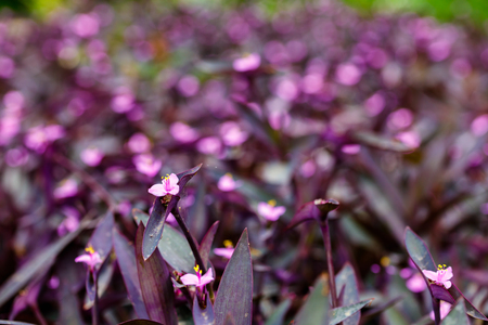 blooming  purple: Close up view of a pretty blooming plant with purple flowers. Stock Photo
