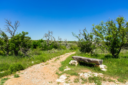 nature beauty: The natural beauty of a nature trail in the Texas Hill Country.