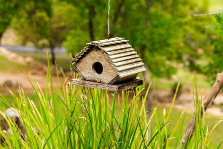 birdhouse: Cute wooden birdhouse hanging in a backyard. Stock Photo