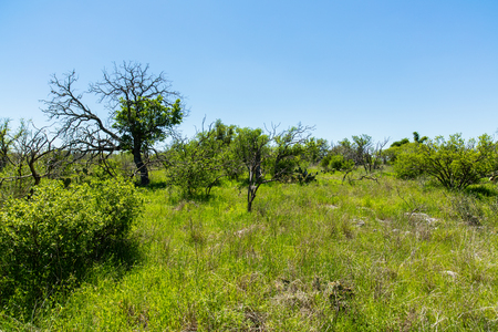 destination scenics: The natural beauty of a nature trail in the Texas Hill Country.