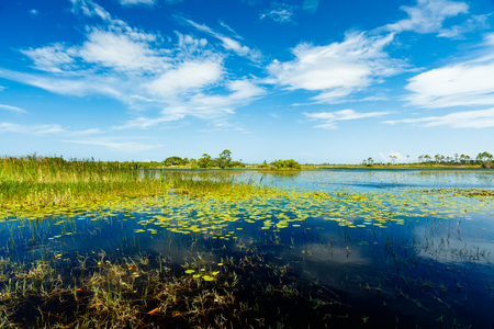 bayou: Beautiful nature preserve in Port Saint Lucie Florida.