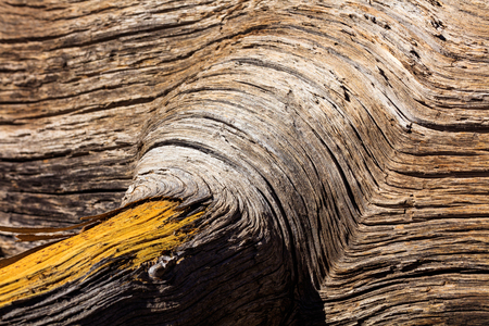 flagstaff: Close up view of tree bark at Sunset Crater Volcano in Flagstaff, Arizona. Stock Photo