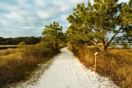 Beautiful nature trail along Philips Inlet in the North Florida panhandle area near Panama City.