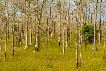 everglades: Beautiful landscape of the Big Cypress National Preserve in the Florida Everglades.