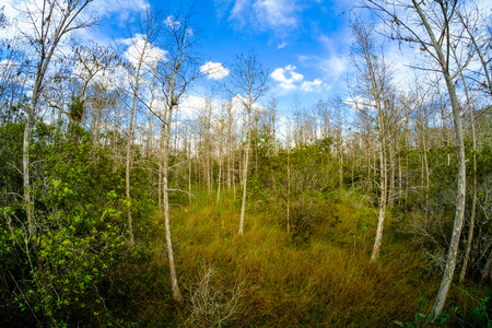 Beautiful landscape of the Big Cypress National Preserve in the Florida Everglades.