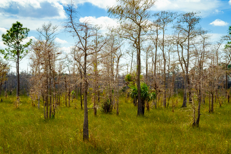 everglades national park: Beautiful landscape of the Big Cypress National Preserve in the Florida Everglades.
