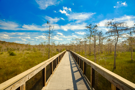 Beautiful landscape of a nature trail boardwalk in the Big Cypress National Preserve in the Florida Everglades.