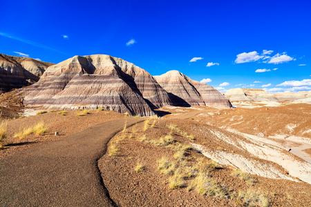 Desert landscape of the beautiful petrified forest in Arizona.