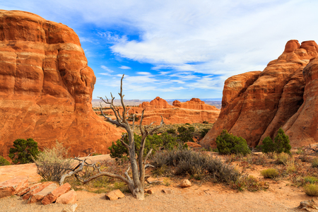 devils garden: The natural beauty of Arches National Park in Utah.