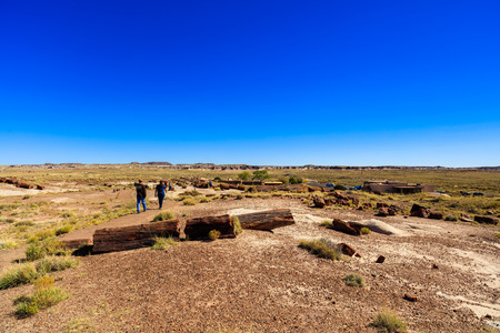 Navajo County, AZ USA - October 19, 2016: The Petrified Forest National Park is a popular tourist destination in northeastern Arizona.