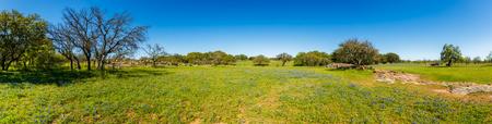 晴れた日にテキサスの丘の国牧場ブルーボ ネットとオークの木の美しいパノラマの景色。 写真素材