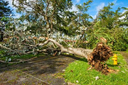 Coral Gables, Florida - 11. September 2017: Trümmer gezeichnete Straßen als Folge des Hurrikans Irma in dieser populären Nachbarschaft in Miami.