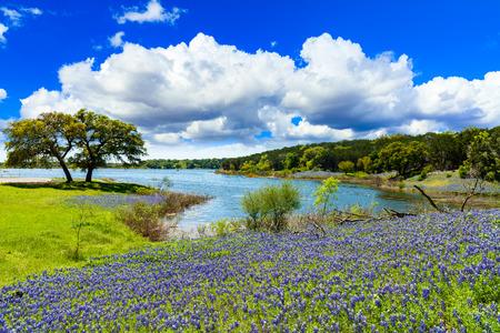 テキサスの丘の国の湖に沿って美しい bluebonnets。 写真素材