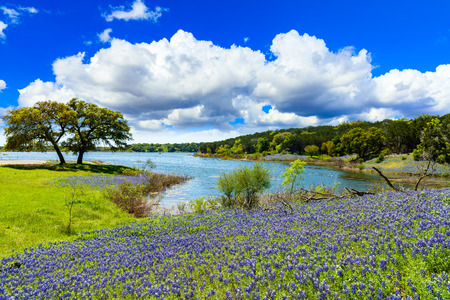 Beautiful bluebonnets along a lake in the Texas Hill Country. Foto de archivo