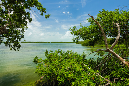 Seascape view of the popular Florida Keys with mangrove trees along the bay.