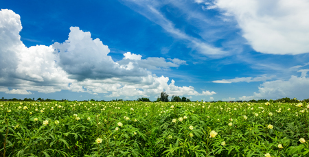Landscape view of a freshly growing agriculture field.