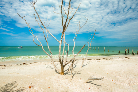 Decaying mangrove tree along Fort Myers Beach on the west coast of Florida. Stok Fotoğraf