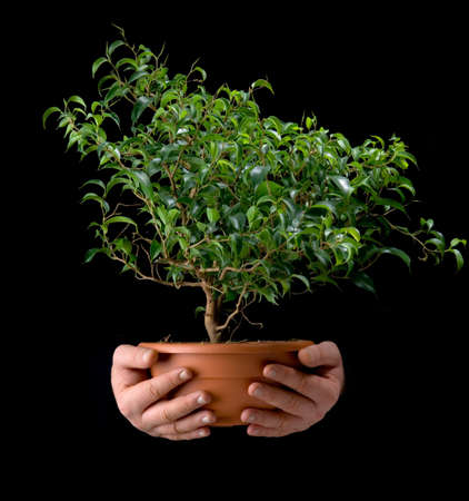 vessel with a small tree in the hands of men Stock Photo - 9143255