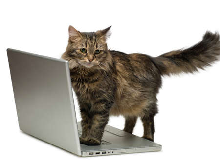 fluffy cat and a computer photo