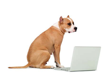 dog and a computer on an isolated background Stock Photo