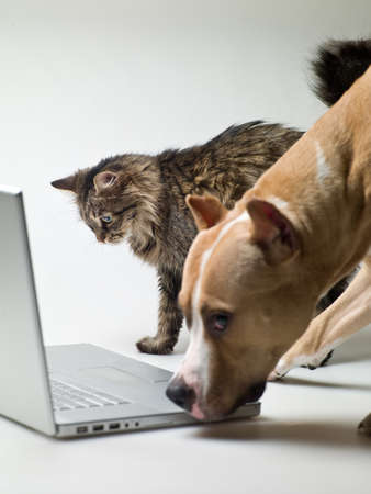 computers and communications: cat and dog next to a laptop on a white background