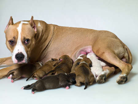 dog with puppies who suck milk photo