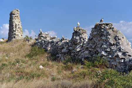 pigeon owl: Birds resting on stones before hunting on sky background