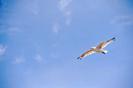 animal bird in flight against a blue sky photo