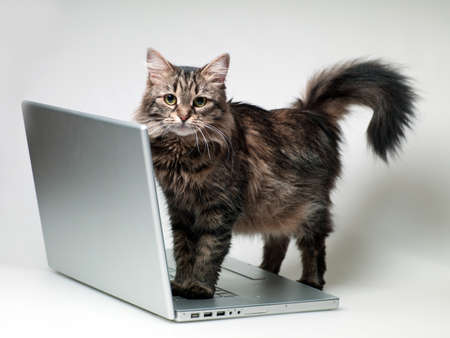 cat paws on a laptop is on a white background