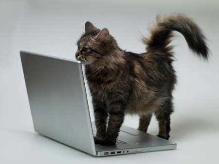 cat on a white background next to a laptop Stock Photo