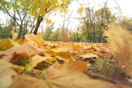 photo taken during the autumn leaves fall Stock Photo - 17610305