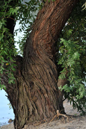 photo of the tree which is a close-up Stock Photo - 17610327