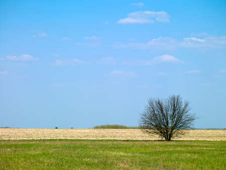 picture of landscape and tree in a field against the sky Stock Photo - 17668569