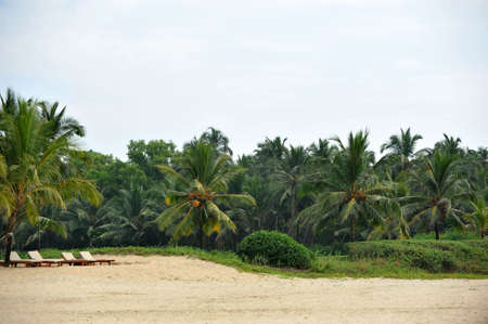 photo landscape of palm trees and beach in Goa Stock Photo - 17899875