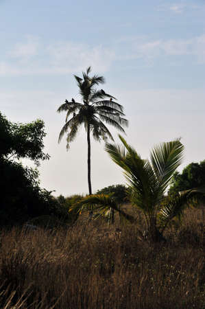 landscape photography of nature to Goa in India Stock Photo - 18257046