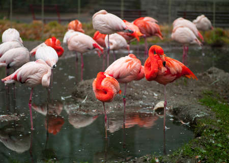 Photos of animals flock of pink flamingos resting in the river photo