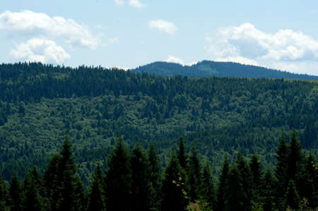 landscape Carpathian mountains and trees against the sky photo