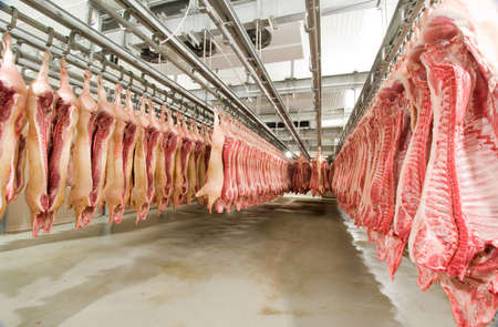 Photo of slaughtered pigs hanging on Crook in a large cold store Stock Photo