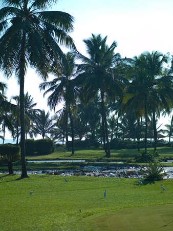 Photo beautiful landscape of palm trees in the sea of India Goa