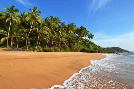 Photo beautiful landscape of palm trees and clouds at Goa in India