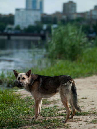 Photo dog standing near the river in the city center on sky background photo