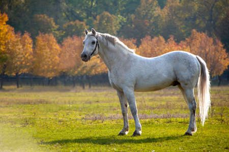 Photo of a beautiful white horse in nature on a background plant
