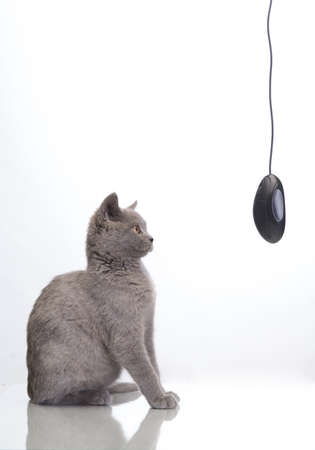 cute cat with a computer mouse photo