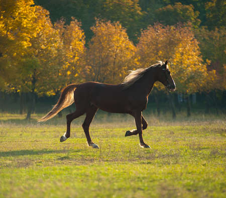 beautiful brown horse standing in a field Stock Photo