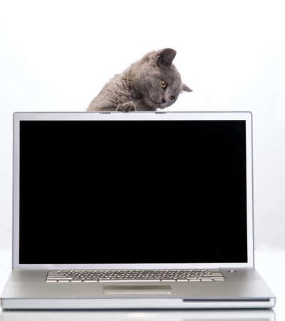 little kitty with a laptop on a white background