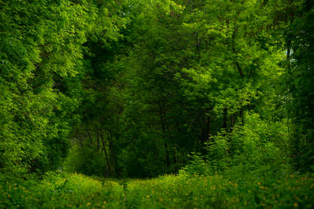 green vegetation: beautiful green vegetation in the forest with